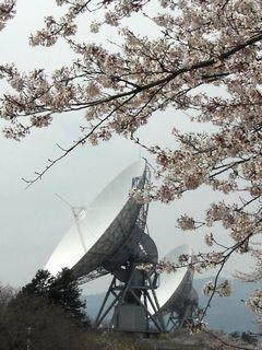桜とパラボラ