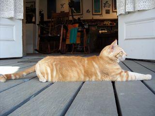 集合場所の猫