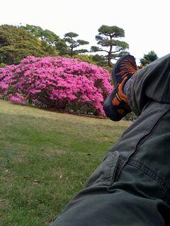 [写真]鎌倉文学館の庭でゴロゴロ