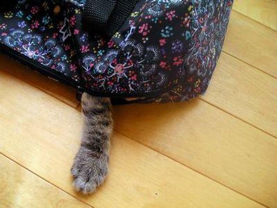 [写真]お出かけバッグの中から
